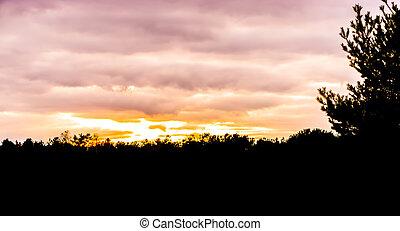 dunkel, silhouette, von, a, wald, landschaftsbild, szenerie, an, sonnenuntergang, sonnenuntergang, geben, a, schöne , effekt, in, der, himmelsgewölbe, und, wolkenhimmel