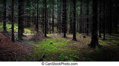 dunkel, teil, wälder