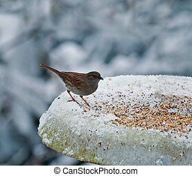 Dunnock on snowy feeder