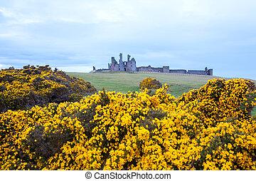 Dunstanburgh castle England - Dunstanburgh castle with...