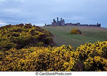 Dunstanburgh castle UK - Dunstanburgh castle with Yellow...