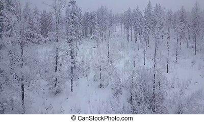 dunstig, verschneiter , dunst, wälder, oben, weißes