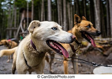 Duo of Dogs in the Woods