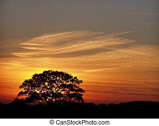 durante, árvore, sundown
