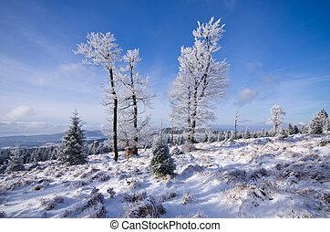durante, árvores inverno