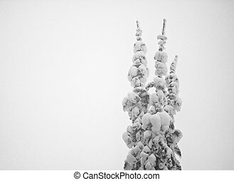 durante, árvores, neve, blizzard, coberto