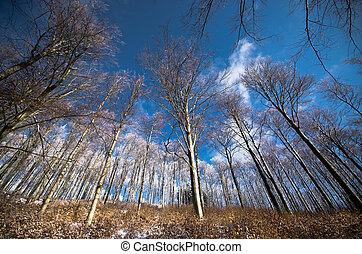 durante, céu, árvores inverno