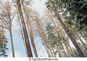 durante, floresta, inverno