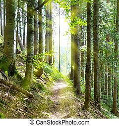 durch, grüner wald, bäume, pfad