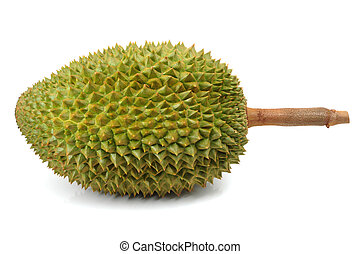Durian Stock Illustrations 1534 Durian Clip Art Images And