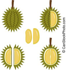 Durian fruit icon in flat style