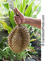 Durian the king of fruits.