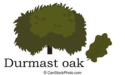 Durmast oak Trees vector element. vector green - Durmast oak...