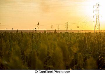durra, solnedgång
