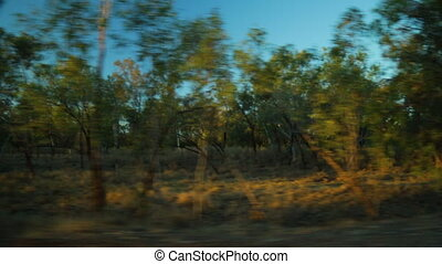 Dusk drive through the Australian bush