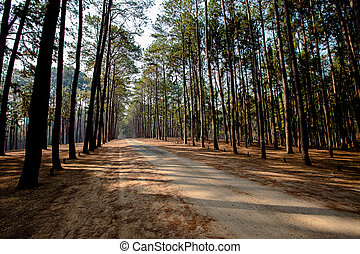 Dusk, Forest, Natural Phenomenon, Springtime, Sun