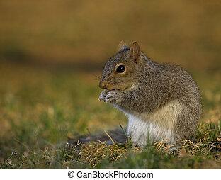 Dusk squirrel