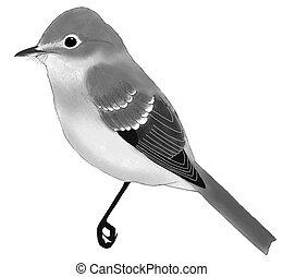 Dusky Flycatcher Empidonax oberholseri