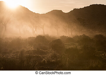Dust Clouds the Air During Sunset at Joshua Tree