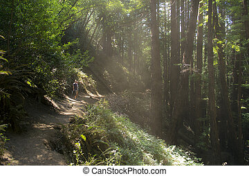Dust & Light at Muir Woods - A pair of hikers on a trail in ...