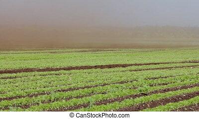 Dust-storm ( dust devil; dust whirl) on agricultural lands....