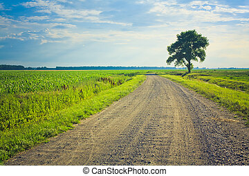 dusty road with alone tree