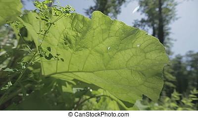 Dutch Angle Small Huge Leaf Plants - Dutch angle shot of...
