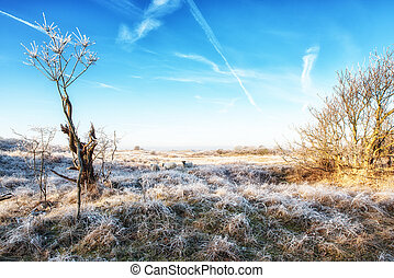 A Dutch Coastal Winter Landscape