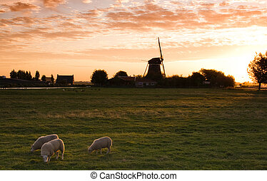 Dutch country landscape with mill and sheep