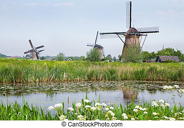 Dutch country landscape with windmills in spring