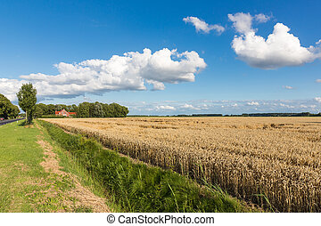 Dutch farmland with wheat field and cloudscape