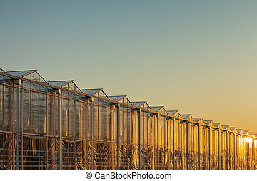 Dutch greenhouse with the sun reflecting in the glass