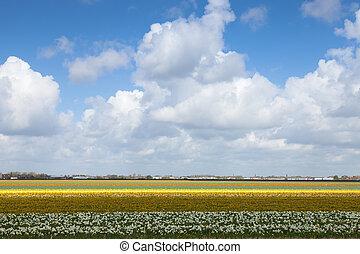 Dutch Landscape, Netherlands