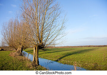 Dutch landscape - Typical Dutch landscape with pollard...