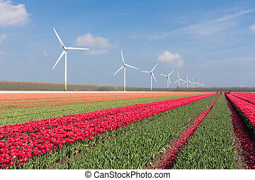 Dutch landscape with tulips and wind turbines