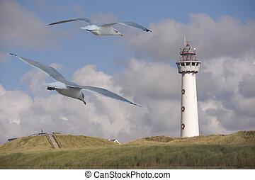 Dutch Light house with seagulls