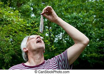 Dutch man is eating herring - Dutch man is eating typical ...