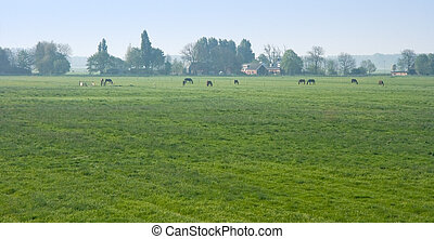 Dutch polder landscape with farm and horses in the early morning