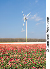 Dutch wind turbine behind a field of red tulips