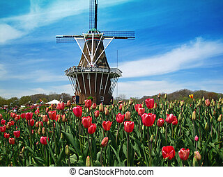 Dutch windmill in a field of blooming tulips
