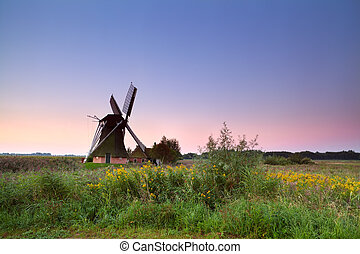 Dutch windmill on flowering meadow at sunrise