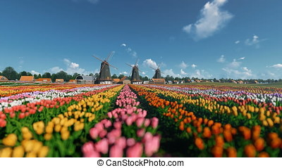 Dutch windmills and field of tulips against beautiful sky,...