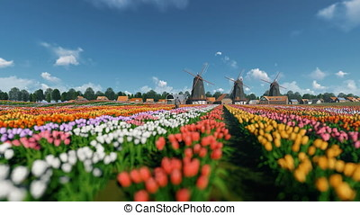 Dutch windmills and man ridding bike on a field with tulips...