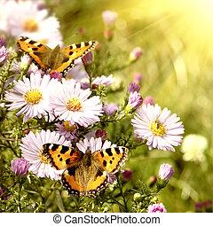 dva, motýl, dále, květiny