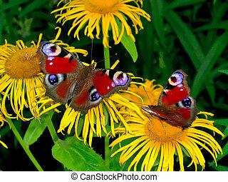 dva, páv, motýl
