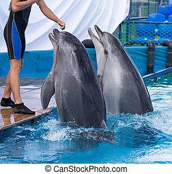 dwa, delfiny, w, przedimek określony przed rzeczownikami, kałuża