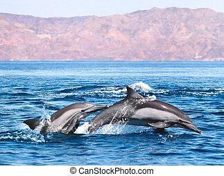 dwa, delfiny