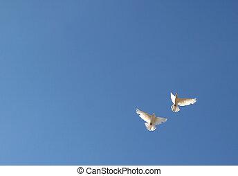 dwa, gołębice, w, przedimek określony przed rzeczownikami, niebo