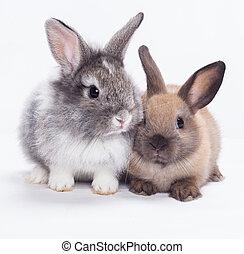 dwa, króliki