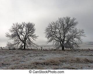 dwa, mroźny, drzewa, jak, przedimek określony przed...